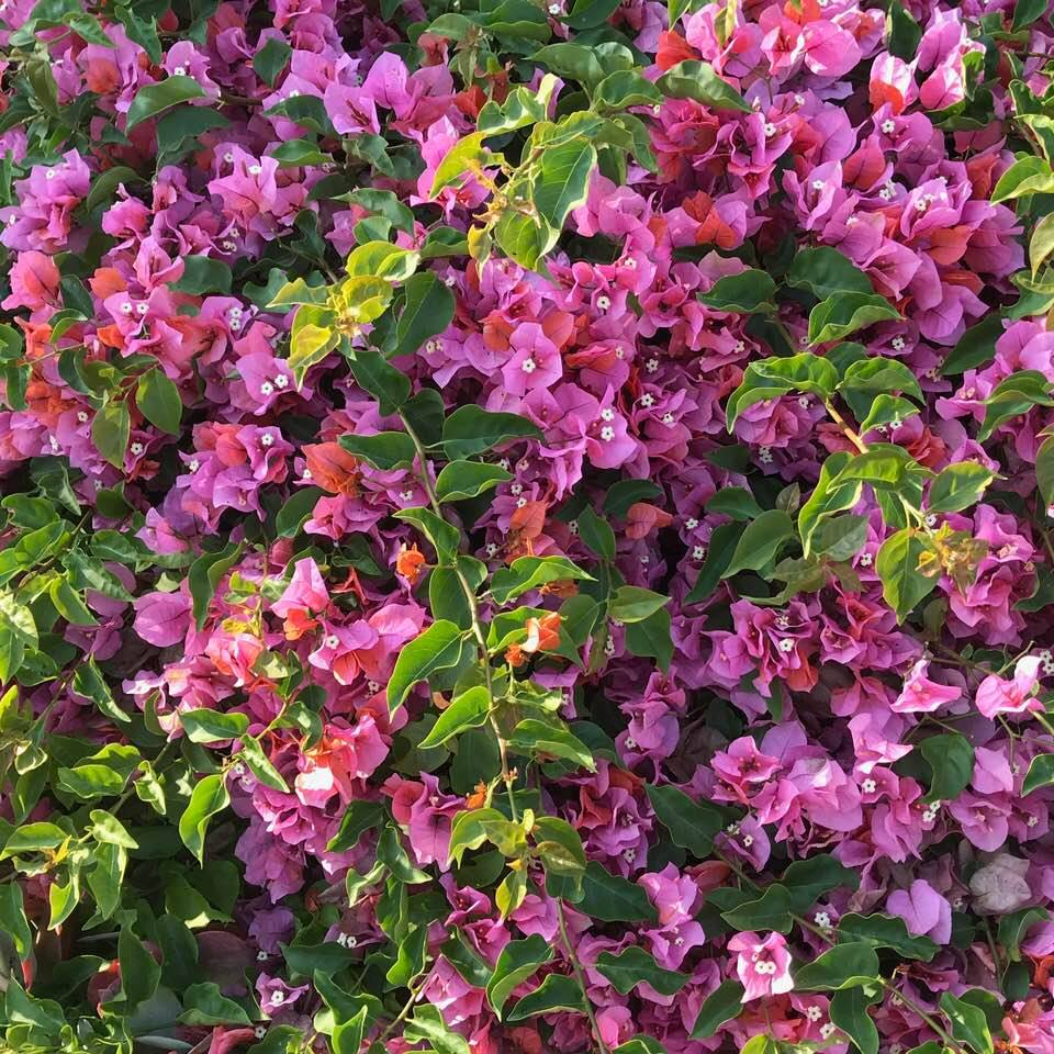 Behrooz Parhami Victory Cross Country Wiring Diagram Summer Flowers 5