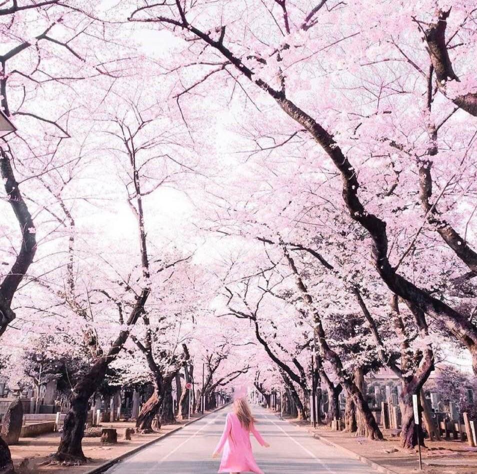 Behrooz Parhami Prestige Car Alarm Wiring Diagram Cherry Blossoms In Tokyo