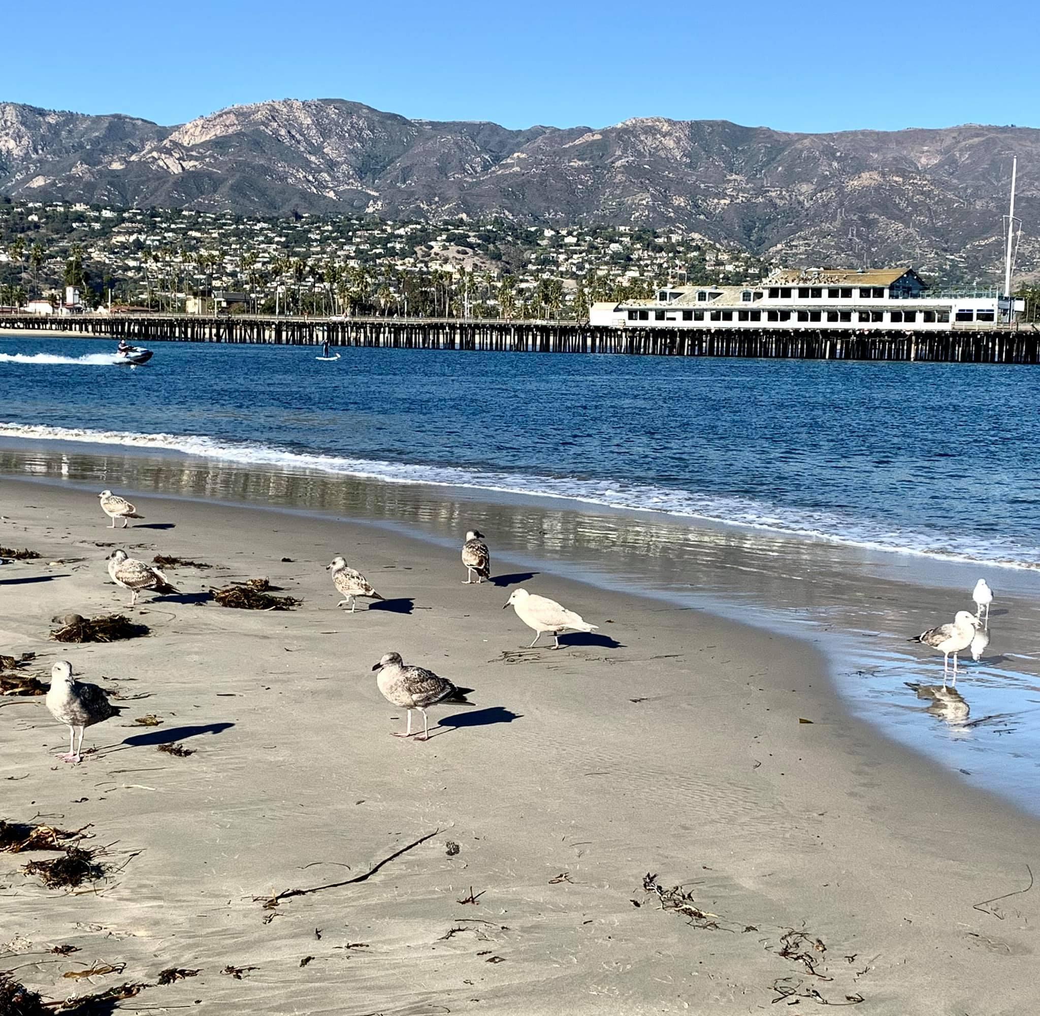 Birds on a fairly isolated beach near Santa Barbara Harbor's entrance channel