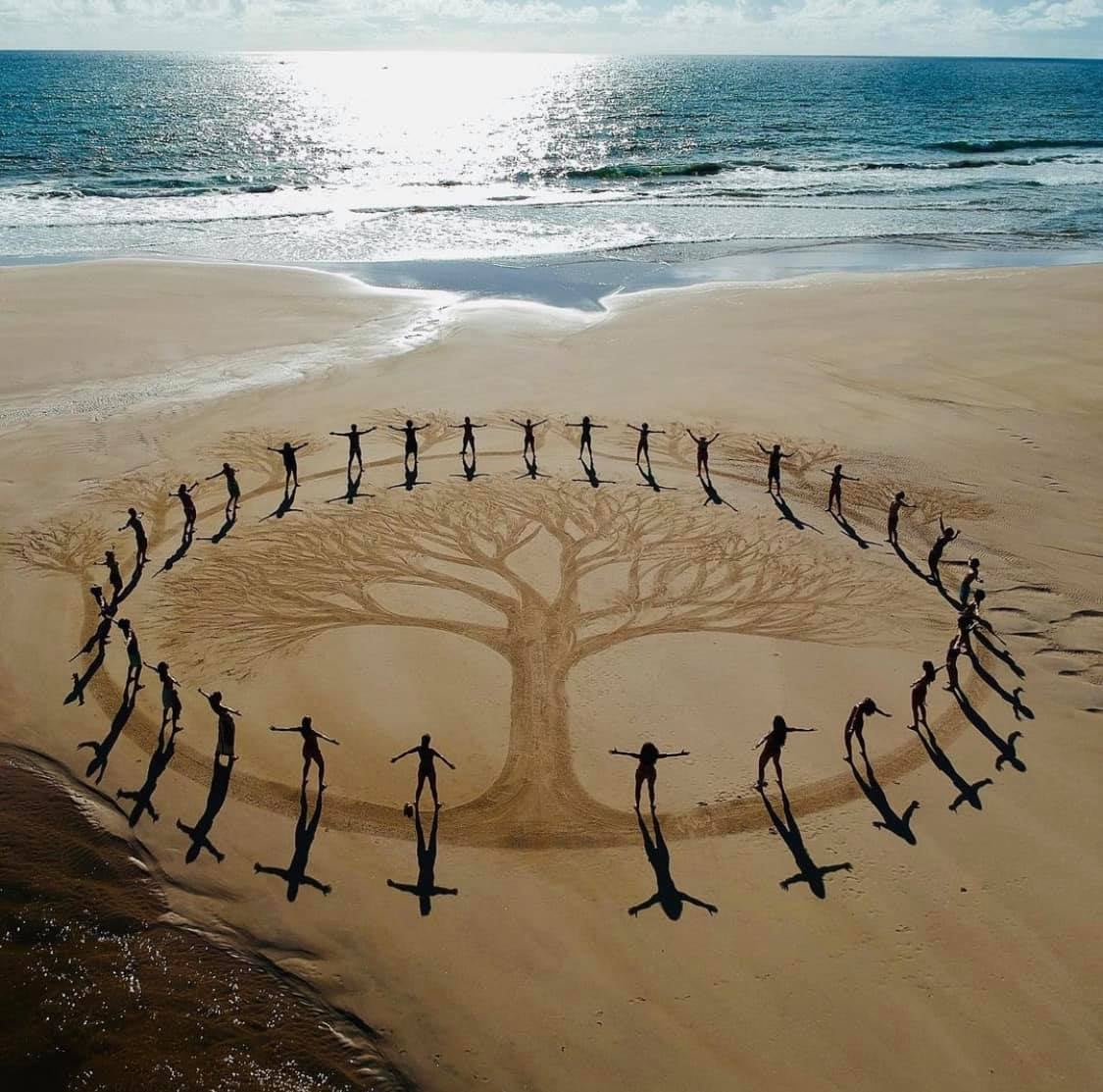 Circle of humans around the image of a tree, drawn on a beach