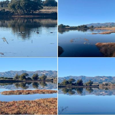 Goleta's Devereux Slough looked wonderful on Tuesday 12/29, following Monday's heavy rainfall