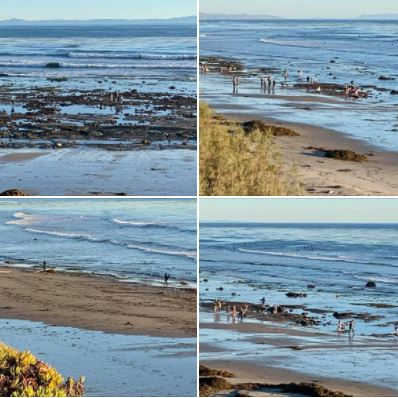 Tuesday afternoon's super-low tide brought many explorers and treasure-hunters to UCSB's West Campus Beach