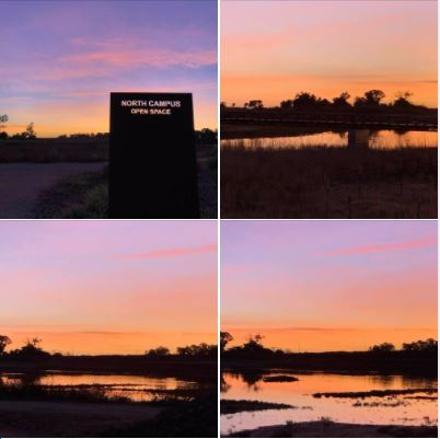 Sunset at UCSB's North Campus Open Space: Photos, Batch 1