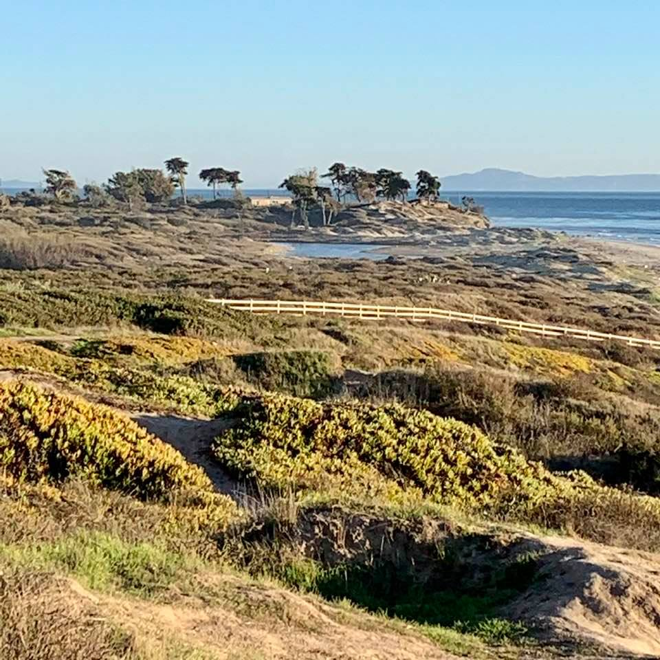 Wednesday 1/20 afternoon, on the majestic Elwood bluffs in Santa Barbara: Photo 4