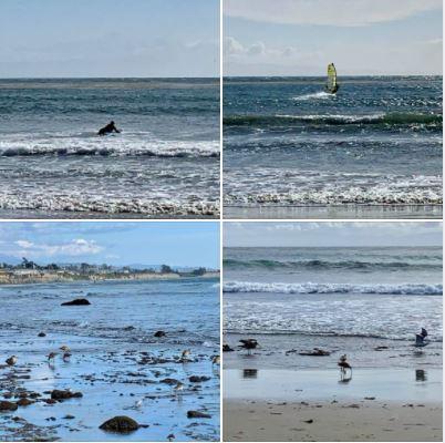Yesterday's walk on the beach: Batch 2 of photos