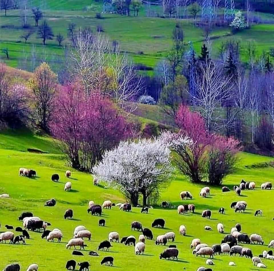 The beautiful nature of Talesh region, Guilan Province, Iran