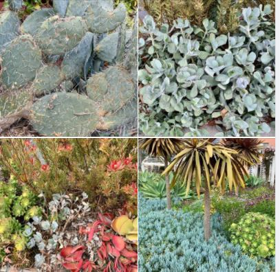 Landscaping diversity in and around UCSB's West Campus: Batch 1 of photos