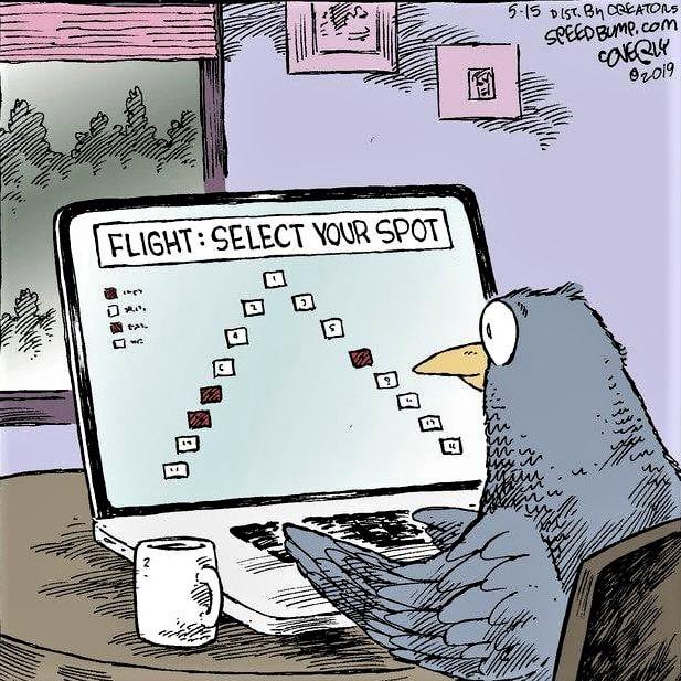 Cartoon: Bird selecting its spot in flight formation