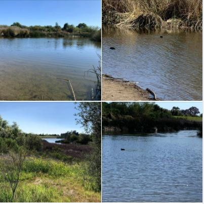 A beautiful SoCal afternoon, walking in and around Goleta's Lake Los Carneros Park: Batch 1 of photos