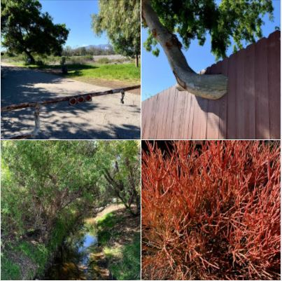 A beautiful SoCal afternoon, walking in and around Goleta's Lake Los Carneros Park: Batch 3 of photos