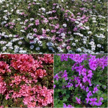 Flowers I photographed on Monday during my walk along Pacific Oaks Road in Goleta