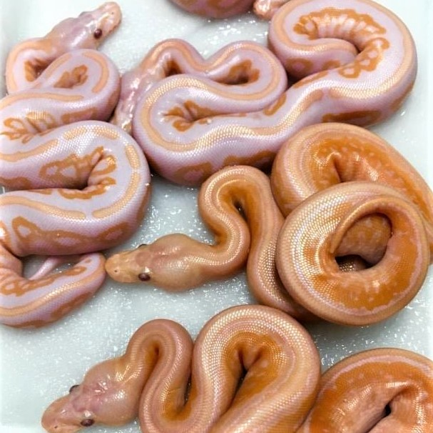 Glazed donuts, anyone? Oops, these aren't donuts!