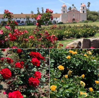 The Rose Garden at Santa Barbara Mission: Batch 1 of photos