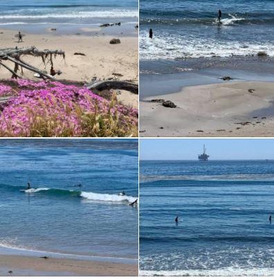 Photos from Coal Oil Point Beach in Goleta
