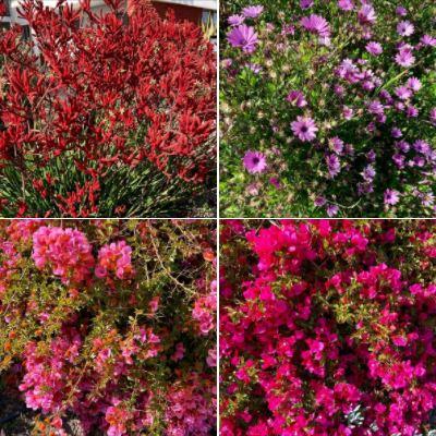 Photos from my walk of Sunday 5/2 in Isla Vista: Batch 2