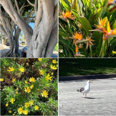 Photos from my walk of Sunday 5/2 in Isla Vista: Batch 3