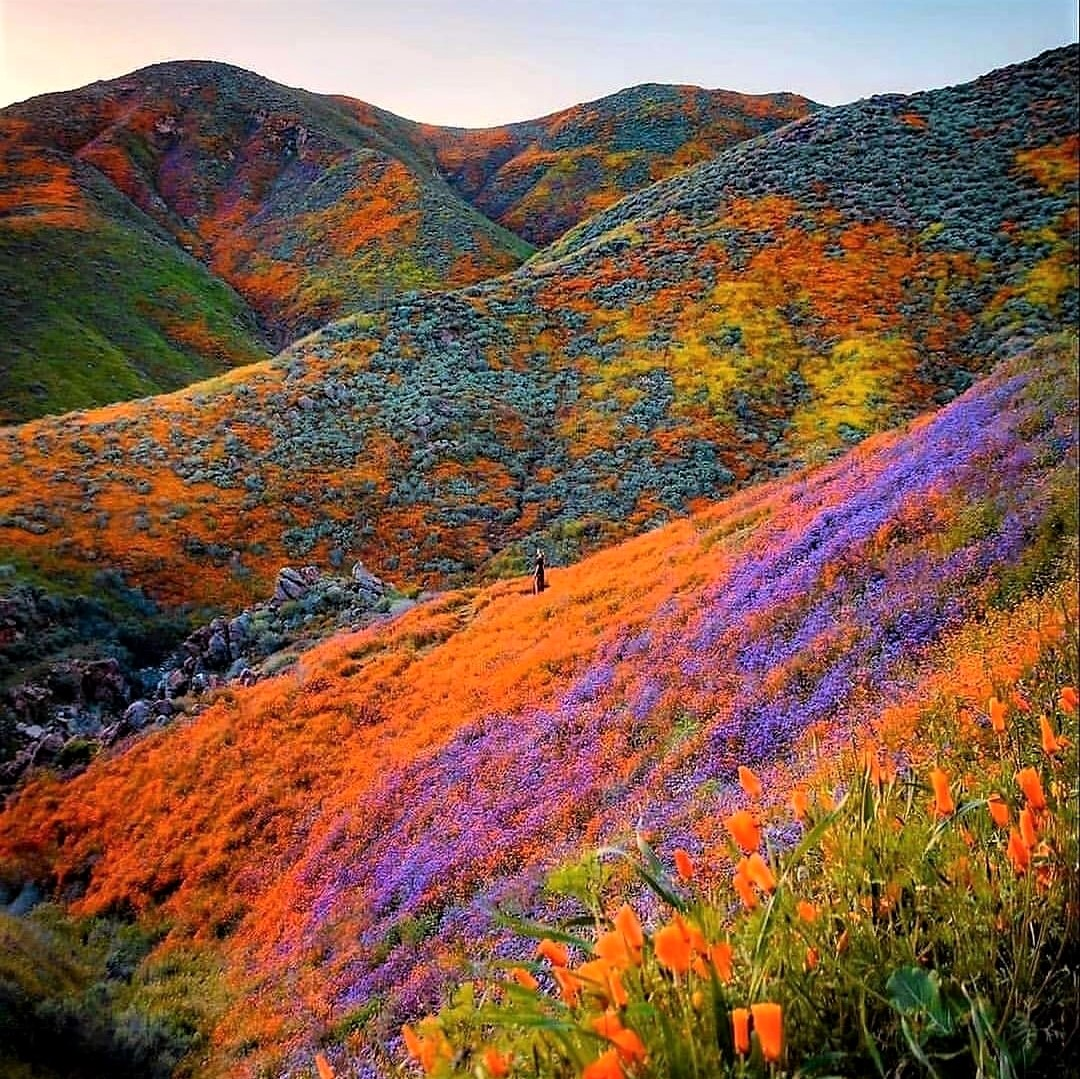 Heaven on Earth: Himalayan Valley of Flowers