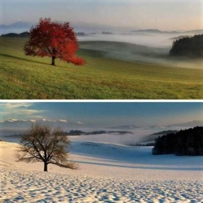 Seasons of a tree: The same tree photographed in fall and winter