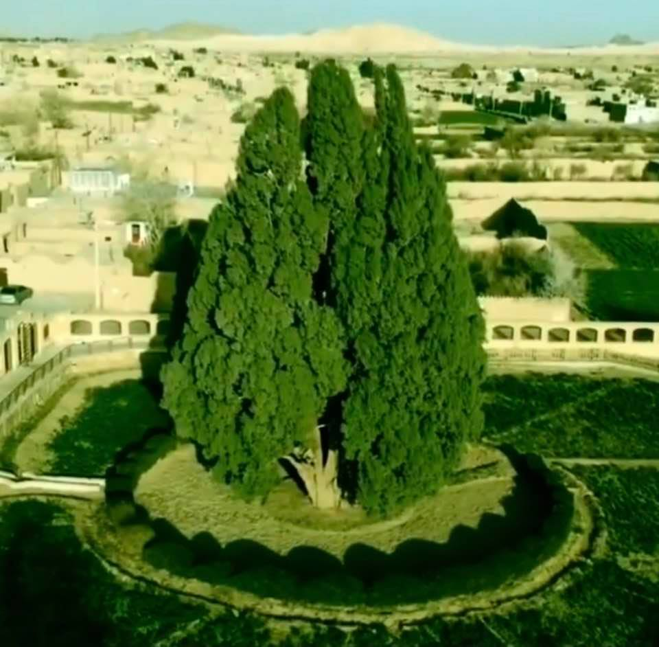 Abarkuh Cypress, the oldest tree in Iran, located in Yazd, is thought to be 4500 years old